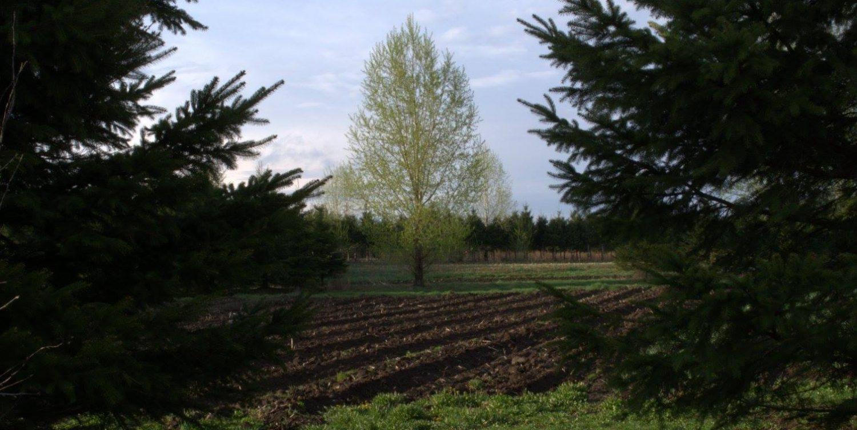 Fruits et légumes certifiés biologiques